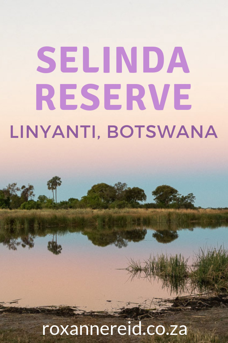 Planning a Botswana safari? Here's why to include Selinda Camp in the Selinda Reserve, Linyanti Botswana. See amazing Botswana wildlife like elephant, lion, leopard, wild dog and sable, experience one of the most luxurious Linyanti lodges close to sister Zarafa Camp and enjoy the best of Botswana holidays. Take a dip in your private pool, a boat cruise, game drive, night drive, bush walk; enjoy a spa treatment and superb food. #Selinda #linyanti #Botswanasafari