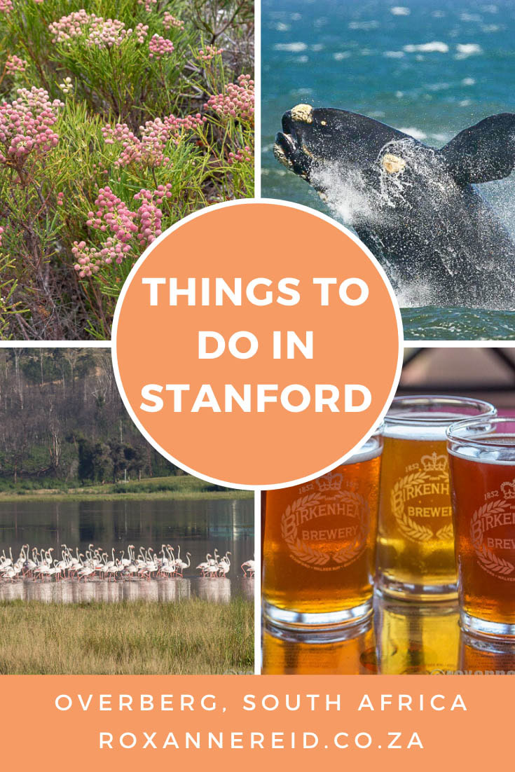 Visiting Stanford in the Overberg, South Africa? Find out some super things to do in Stanford: horse riding, quad biking, whale watching, birding and mountain reserve to beach walks, wine tasting, restaurants, cheese tasting, beer tasting, old buildings or a river cruise on the Klein River. You'll never be bored and won't go hungry.